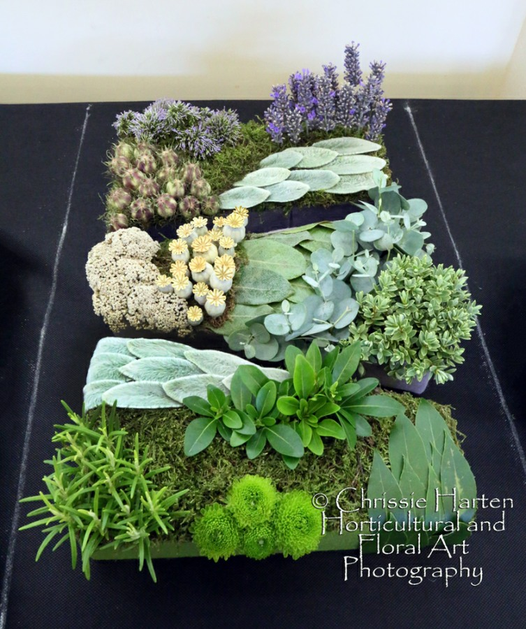 "Class 7 ""Morning Mist"" (Pavé Exhibit) - Highly Commended - J Mallett"